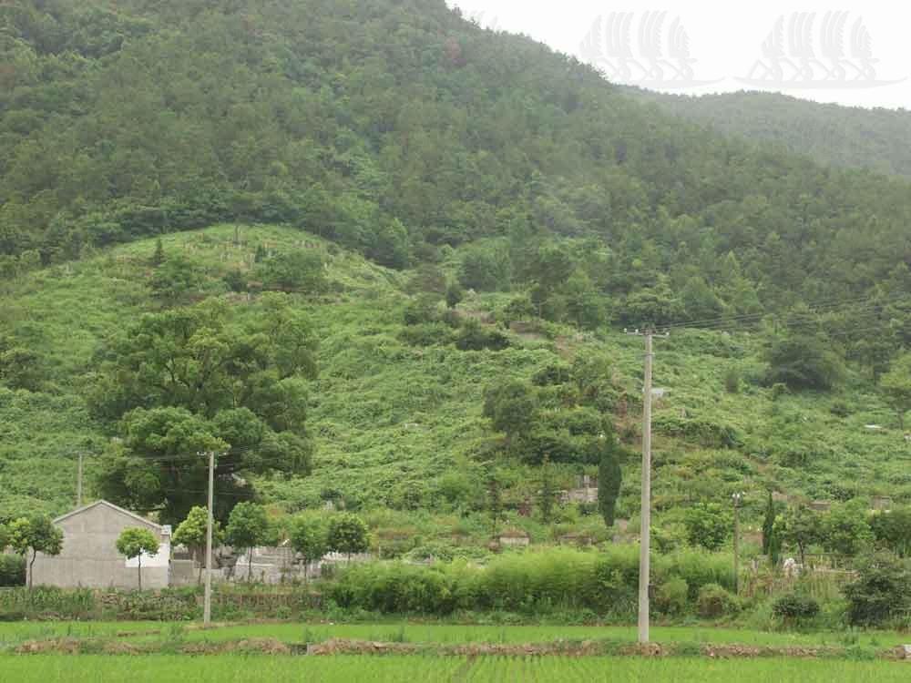 描写中坡后山的风景